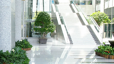 苏州办公室内绿化