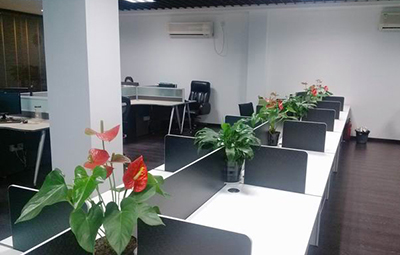 苏州办公室内绿植租赁,苏州办公室内绿化