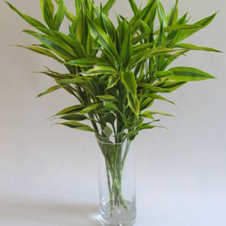 苏州绿植租赁,苏州绿植盆栽,苏州绿植花卉,苏州园林绿化,苏州园林设计,苏州园艺景观,苏州园林绿化养护,苏州植物出售