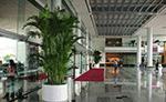 苏州商场绿化