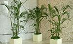 苏州酒店绿化