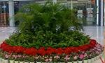 苏州会议会展绿化